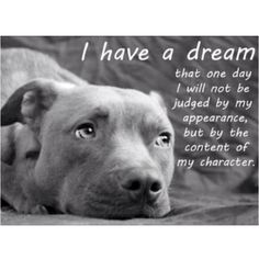 Pit bulls :)