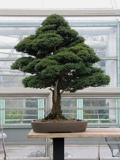 How to Succeed at #Bonsai Gardening THE BEST HOME GARDENING GUIDE IS WAITING FOR YOU.