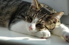 How One Cat Fell Eight Stories -- And Lived