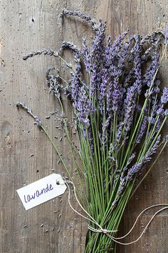 Lavender By Olivier Ghettem.I just cut lavender from our garden to take with me on a road trip to stay with mom for a week. Lavender Green, French Lavender, Lavander, Lavender Fields, Lavender Flowers, Beautiful Flowers, Lavender Bouquet, Lavenders Blue Dilly Dilly, Malva
