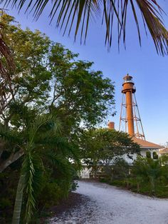 Day 175: Joni's Beautiful Things Challenge. Exploring Sanibel Island! It's always a treat to explore Sanibel Island, Florida! Beautiful beaches, historic Lighthouse, seashells galore, tropical birds, palm trees, wildlife preserves, bike paths, hiking trails, kayaks, and more are there for recreation. It's a photographer's delight as well! #jonisbeautifulthingschallenge #Sanibel #Florida #beaches #seashells #bikepaths #palmtrees #hiking #tropical #lighthouse