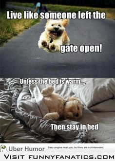 Dog philosophy this is so Abby