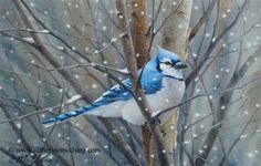 Catherine McClung watercolor - Winter Jay
