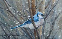 """❄Hiver❄ """"Winter blue jay"""" aquarelle de Catherine Mc Clung, artiste canadienne qui vit et travaille dans le Michigan."""