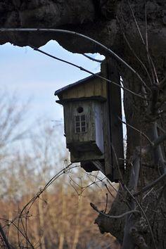 Creative tree house ashburn