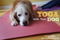 Yoga With Your Dog- maybe I can sneak in some p.t.