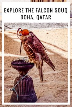 Falcon Souq in Doha, Qatar is a mystifying place. Understand everything about the ancient art of falconry and more in Doha, Qatar. Travel Couple, Family Travel, Qatar Travel, Dubai Travel, Fear Of Flying, Doha, Asia Travel, Eastern Travel, Culture Travel