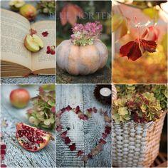 Blue Hortensia: Romantična jesen uz hortenzije..