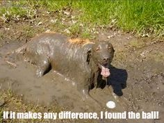 Dogs. Too funny.