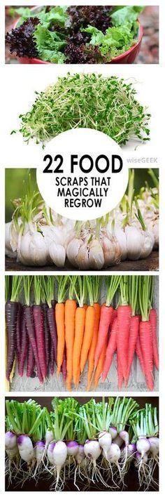 Vegetable gardening, vegetable gardening tricks, food scraps to regrow, popular pin, veggie garden, how to grow vegetables, growing foods, gardening.