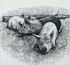 This illustration was created for the Soil Conservatin Service publications. A pen and ink illustration that shows the difficult situation for these animals. Pig Drawing, Pig Pen, High Ground, Pigs, Animal Drawings, Farm Animals, Art Boards, Whale, Wall Art