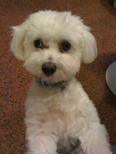 There is another style of leadership I learned from my dog, Kinder. Maltese cutties