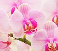 Love this sereen picture of orchids