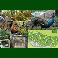 Oiiiiiiiii!!!  Na lista de FÉRIAS da Evelyn, está listado SIMBA SAFARI - o Zoo Safari.  O Zoo Safari foi aberto nos anos 70 por Francisco Luiz de Souza Corrêa Galvão, ou Chico Galvão (ex-dono, quem idealizou e dirigiu o extinto Simba Safári), o parque em que os animais ficam soltos foi reinaugurado em 2001, sob administração da Fundação Parque Zoológico.  No Zôo Safari você fará um passeio através de uma trilha na Mata Atlântica com mais de 4 (quatro) quilômetros. Um Centro de estudos sobre…