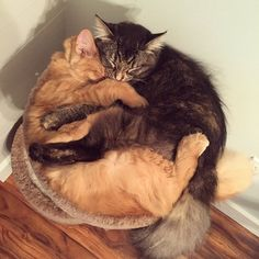 #gato #gatos #móvelparagato #fofura #gatosdormindo