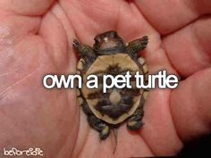 tony perry any real pierce the veil fan knows tony not only loves turtles but he is a turtle XD Tiny Turtle, Turtle Love, Pet Turtle Care, Baby Animals, Cute Animals, Baby Cats, Wild Animals, Tony Perry, Falling In Reverse
