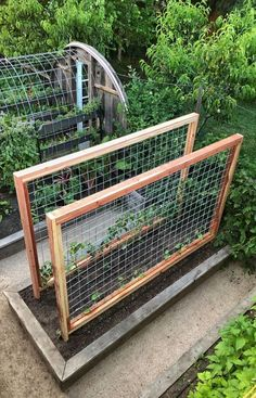 2503 Likes 151 Comments  Kyle Hagerty (@urbanfarmstead) on Instagram: Who wants to build one of these hog wire trellises? By popular demand I cr