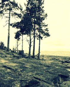 "ministry.of.apathy: ""#пейзаж #природа #море #осень #валаам #холод #грусть #печаль #одиночество #landscape #nature #autumn #fall  #valaam #evening #twilight #snow #town #sity #cold #sadness #loneliness #путешествие #прогулка #walk #journey"""