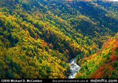 Blackwater Canyon WV Fall Foliage