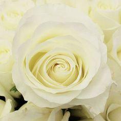 FiftyFlowers.com - Akito White Bulk Rose