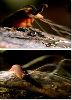 The 6 Most Nightmarish Worms on the Planet | Cracked.com