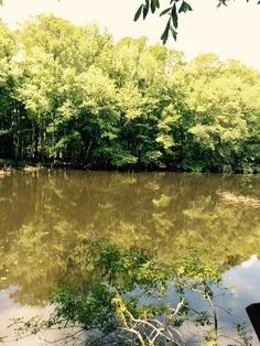 Congaree National Park, SC - Picture of Congaree National Park, Hopkins - Tripadvisor Temperate Deciduous Forest, Congaree National Park, Growing Tree, South Carolina, Wilderness, Acre, Lush, Trip Advisor, National Parks