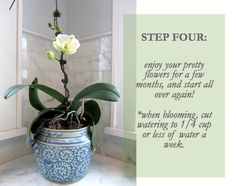 luxe + lillies: HOW TO GROW A LOVE FERN [ORCHID]
