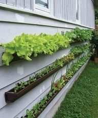 Rain gutter garden...on the side of your house! What a great idea for a nearby garden or if you have no room on your property.