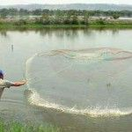 Businessmen and government officials began to outline a strategy to deal with a new problem that worries shrimp producers in Ecuador: a petition filed in late December by a group of US shrimp companies demanding the application of countervailing duties on shrimp imports from Ecuador, among other countries.
