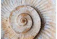 Ben Wood, Shell Fossil Print