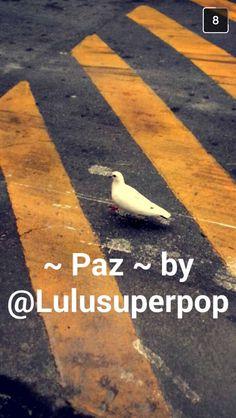 KKK adoro a Lulu super pop ta?!
