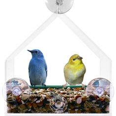 Giant Window Bird Feeder - Grateful Gnome