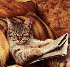 Haben Sie die Neuigkeiten schon gehört? Katzen, cats, news, Zeitung, Brille