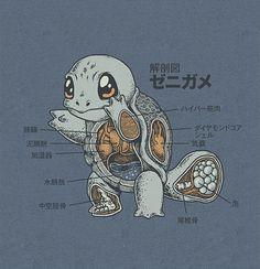 Squirtle Anatomy by Ryan Mauskopf