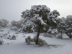 Even after a snowstorm it's a beautiful landscape