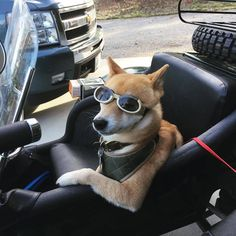 Ideas for ural motorcycle camping vehicles Moto Guzzi Motorcycles, Ural Motorcycle, Motorcycle Camping, Motorcycle Clubs, Motorcycle Garage, Vintage Motorcycles, Motorcycle Photography, Boxer Dogs, Funny Animal Pictures