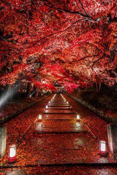"lifeisverybeautiful: "" Kyoto, Japan via Dye it Red by Takahiro Bessho """