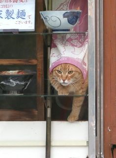 Here I come, ready or not! I Love Cats, Crazy Cats, Cool Cats, Cat Window, Cat Watch, Curious Cat, Ginger Cats, Types Of Cats, Cute Creatures