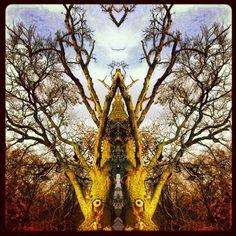 Fairytaletree