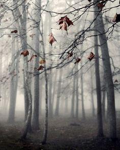 Autumn's End - Nicholas Bell