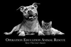 Operation Education Animal Rescue, also known as OpEd, is a non-profit, all-breed, foster-based animal rescue group serving Middle Tennessee. of the proceeds of our quarter sales in 2018 are donated to Operation Education. Animal Rescue Quotes, Nonprofit Fundraising, Animal Welfare, Go Fund Me, Non Profit, Rescue Dogs, Charity, Pup, Adoption