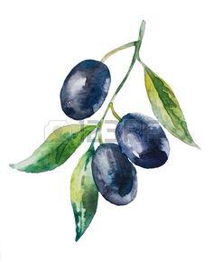 18630582-yaprakları-ile-siyah-zeytin-dalı-suluboya-resim.jpg (366×450)