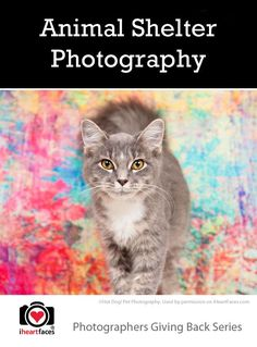 {Photographers Giving Back} Animal Shelter Photography