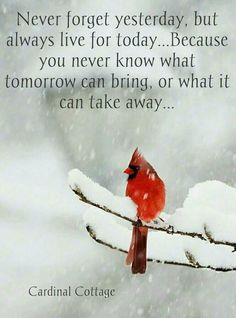 A Quote to Live By. Love this photo of a Cardinal. What a beautiful red bird! A Quote to Live By. Love this photo of a Cardinal. What a beautiful red bird! The Words, Phrase Choc, Positive Quotes, Motivational Quotes, Positive Thoughts, What About Tomorrow, Inspirational Thoughts, Inspiring Message, Meaningful Quotes