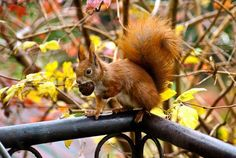 Bon week-end les amis   #automne #automn #outdoors #tourism #nature #beautiful #photooftheday #instagood #picoftheday #calybeauty #ecureuil #youtubeur #naturalista #squirrel #goodtime #colors #instadaily #instalike #amazing #fun #cute #fall #weekend #happyweekend #leaves #feuilles