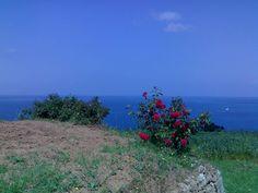 Roses, sky and sea of Monte Argentario, Costa d'Argento, Maremma, Tuscany, Italy