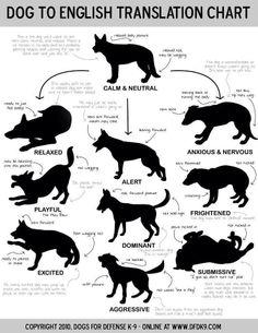 Dog to English (or rather Human) translation chart ~