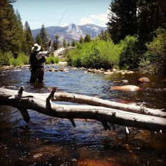 Fly fishing trout and fishing on pinterest for Bear creek fishing