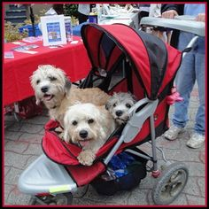 Dog Strollers Provide Comfort to Dogs With Anxiety Issues Funny Animal Quotes, Funny Animals, Cute Animals, Dog Stroller, Baby Strollers, Large Dogs, Small Dogs, Paper Flowers Craft, Dog Anxiety
