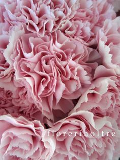 Fioreria Oltre/ Pink carnations